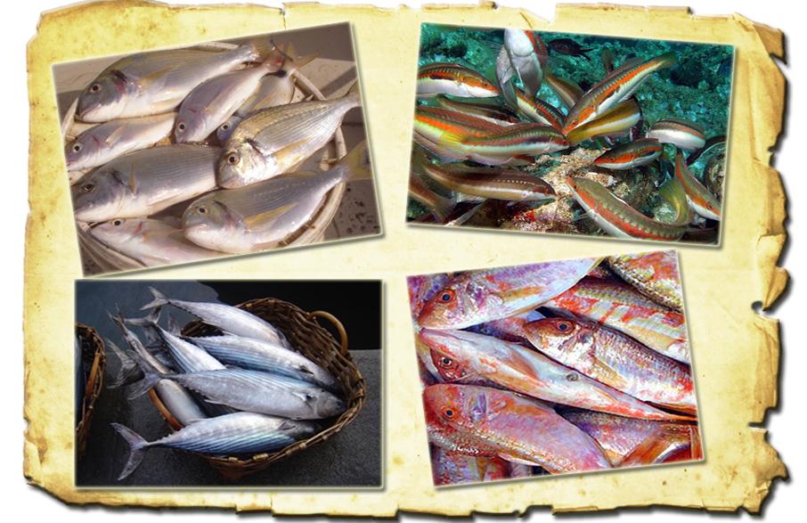 pesci adriatico pescaturismo www.pugliavventura.com