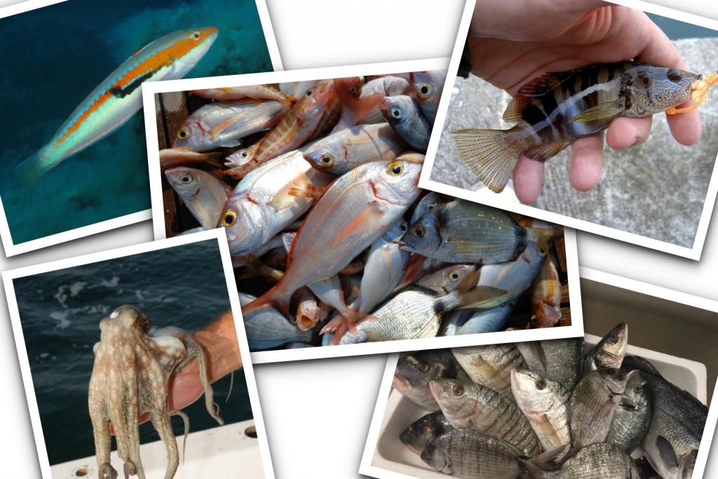 pescaturismo puglia