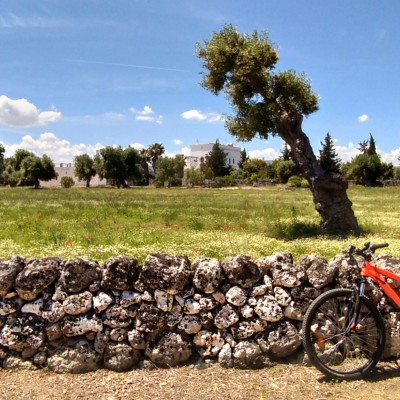 PUGLIA GUIDED CYCLE TOURS BIKE AND TASTING